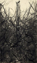 """Ash, sumi and India ink on paper, 14x8"""", 2008"""